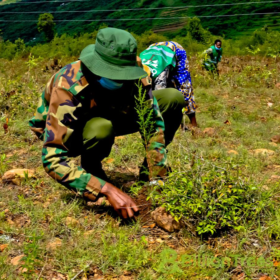 Planting native trees in Kenya.