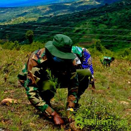 Planting native saplings in Kenya.
