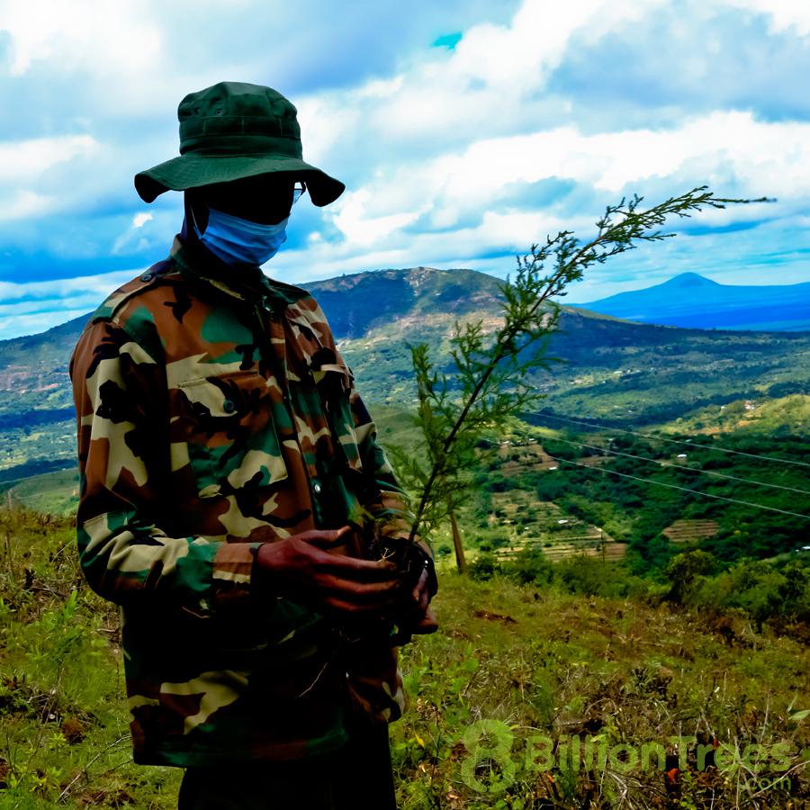 Kenya vista of mountains as 8 Billion Trees team member prepares to planet native sapling.