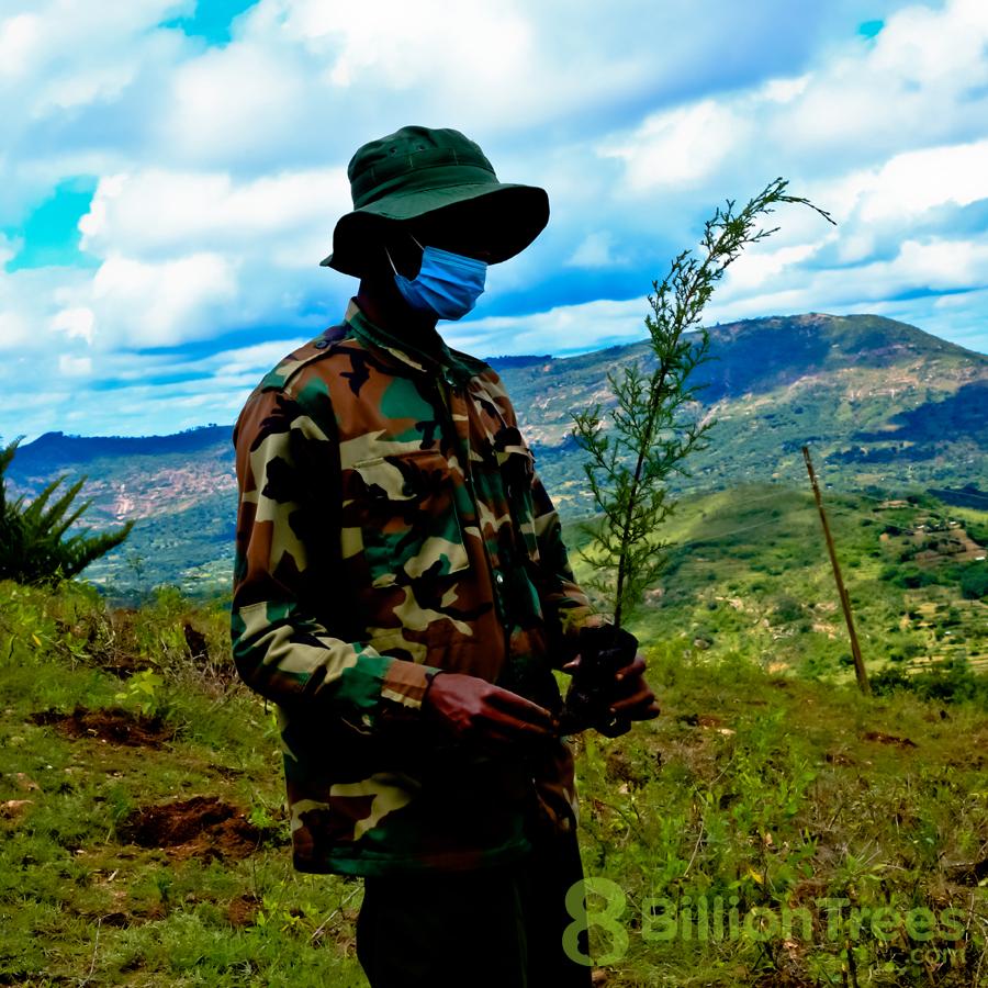 Planting native tree species in Kenya.