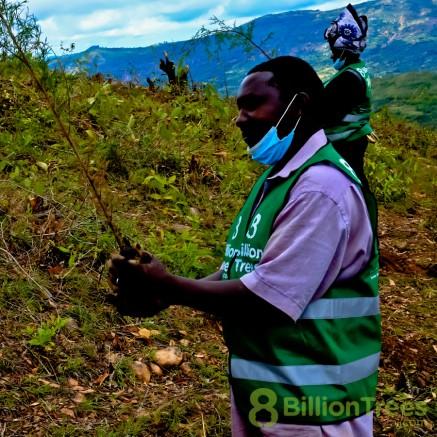 Planting trees in Kenya for reforestation.