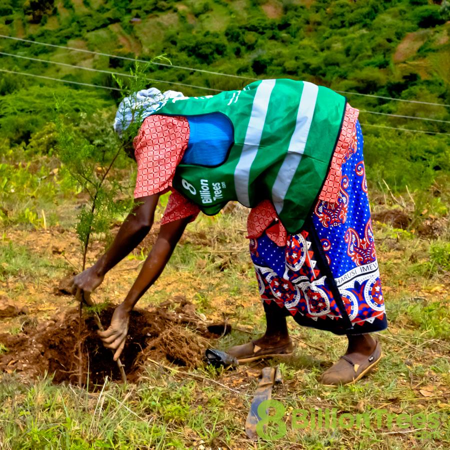Volunteer team in Kenya, planting trees.