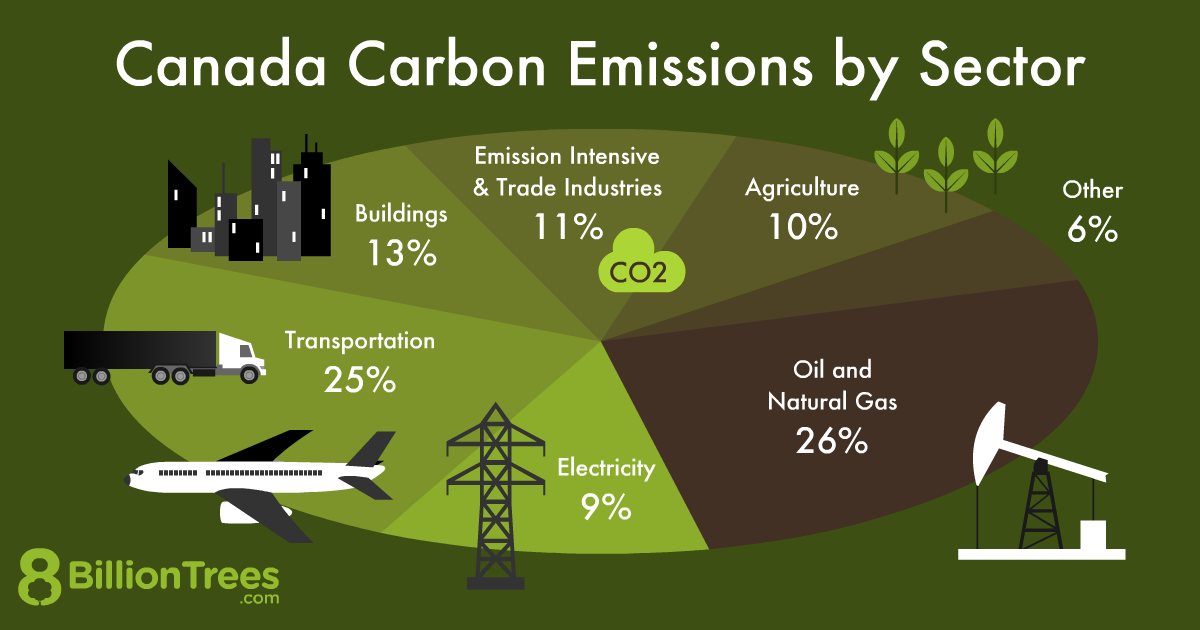 An 8 Billion Trees graphic depicting Canada's carbon emissions by sector, with transportation making up a quarter of all emissions.
