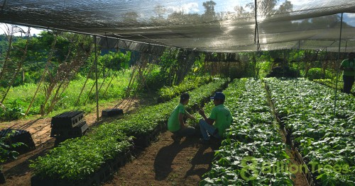 Restoring the rainforest by planting native saplings in Tocantins Brazil, 8 Billion Trees workers rest in the nursery.