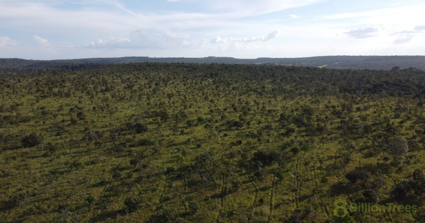 A panoramic and bird's eye view of a flat, green planting site in Brazil, with an 8 Billion Trees watermark.