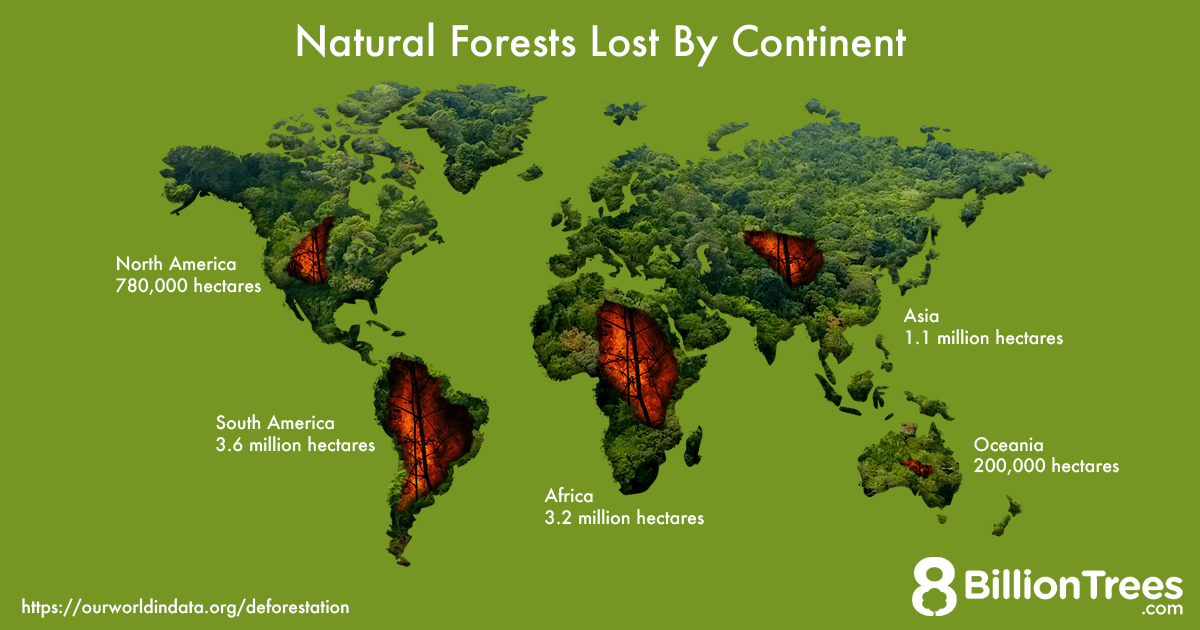 An 8 Billion Trees graphic of a world map labeled with the amount of hectares of natural forests per continent.