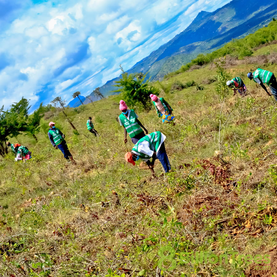 A tilted view of 8 Billion Trees volunteers planting tree saplings at a Kenya reforestation site, with an 8 Billion Trees watermark.
