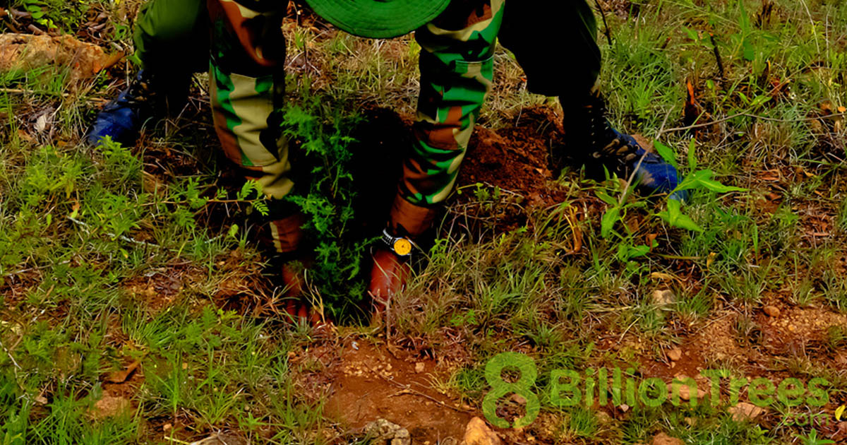 A man in camo and a green hat planting a tree sapling in the ground at a Kenya reforestation planting site, with an 8 Billion Trees watermark.