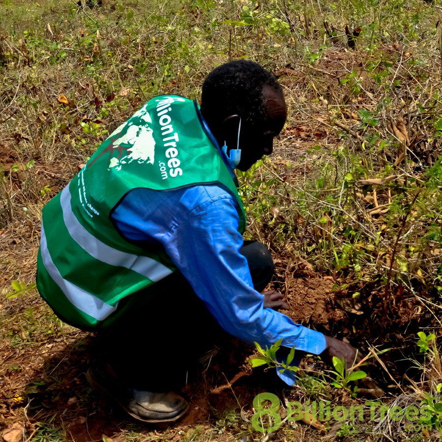 A man in an 8 Billion Trees vest stooping to plant trees at a Kenya planting site, with an 8 Billion Trees watermark.