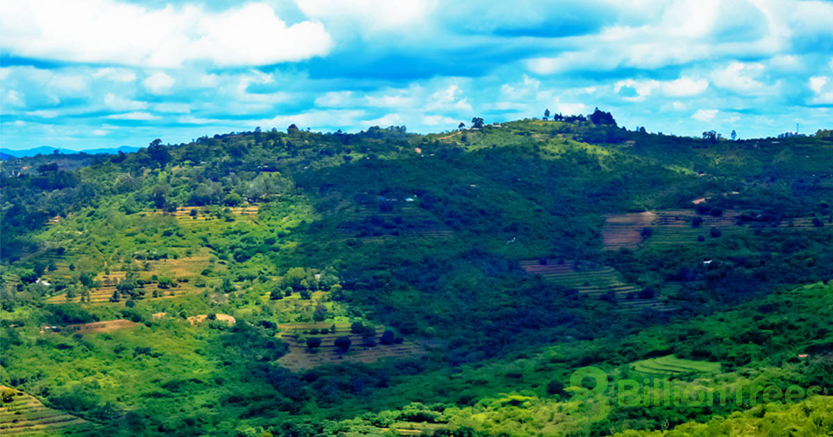 An overlook at a Kenya reforestation planting site, with grassy rolling hills and shadows from the overhead clouds, with an 8 Billion Trees watermark.