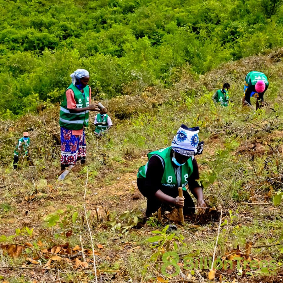 Volunteers in 8 Billion Trees vests and colorful clothing working to plant trees at a Kenya reforestation site, with an 8 Billion Trees watermark.