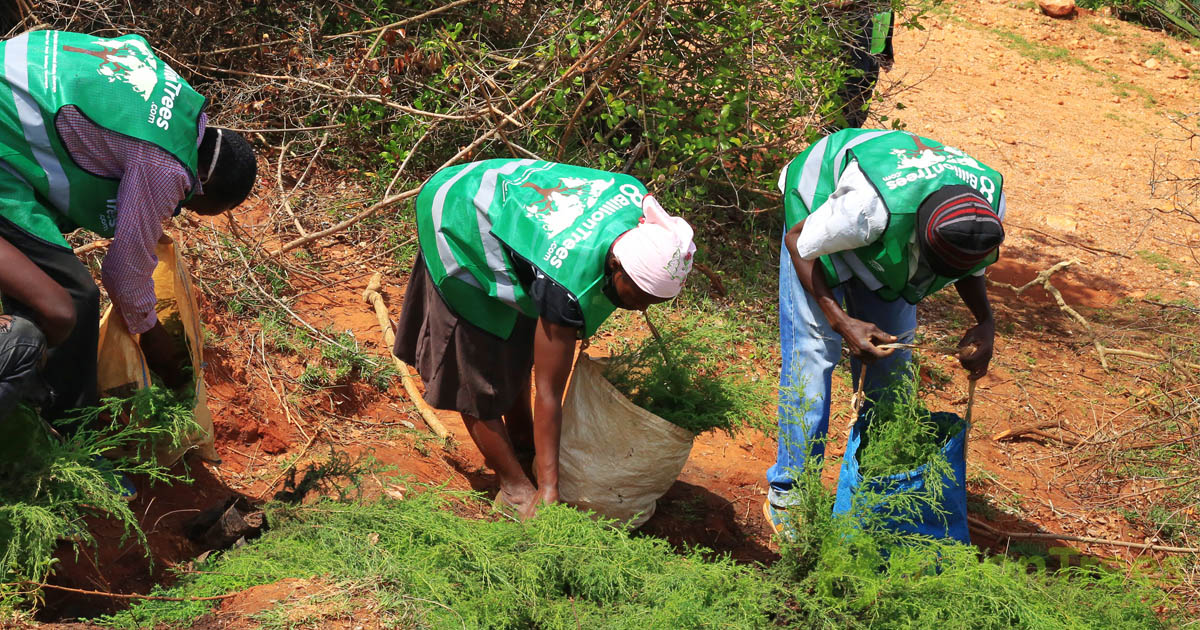 People working at a Kenya reforestation planting site wearing 8 Billion Trees vests, with an 8 Billion Trees watermark