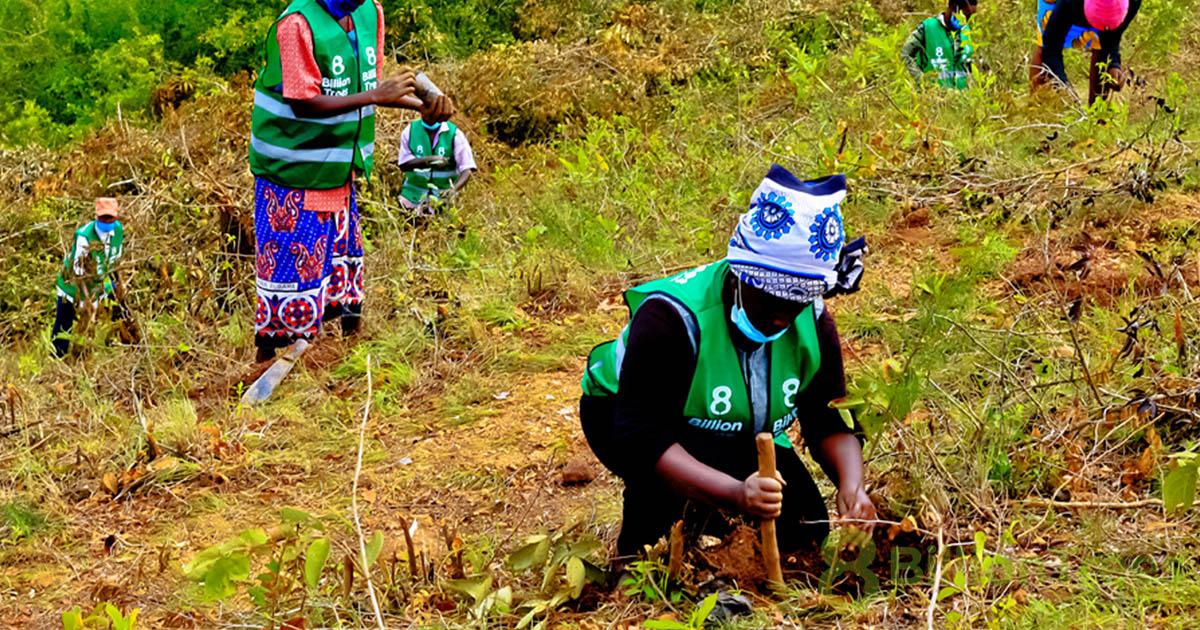 Women in 8 Billion Trees vests in Kenya working to plan tree saplings on a hillside.