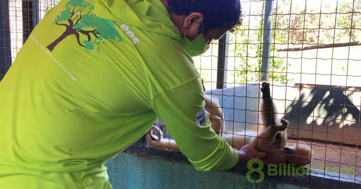 A man in an 8 Billion Trees shirt playing with a howler monkey in an enclosure at Tocantins Fauna Center in Brazil.