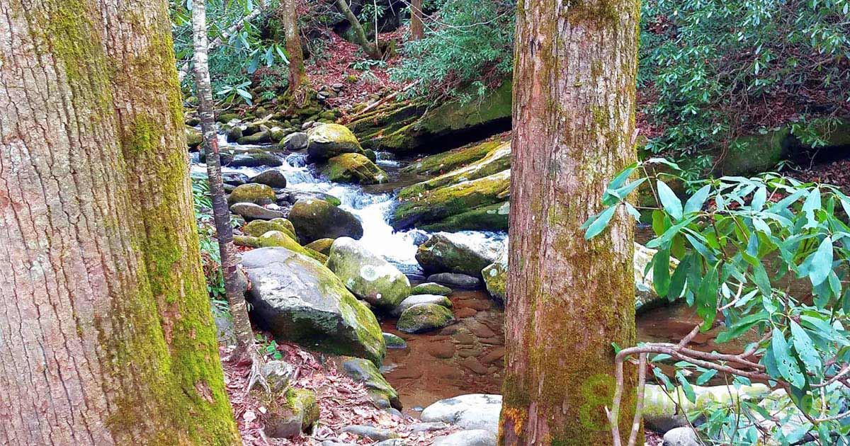 A rocky stream seen between two tree trunks in Great Smoky Mountains National Park, with an 8 Billion Trees watermark.