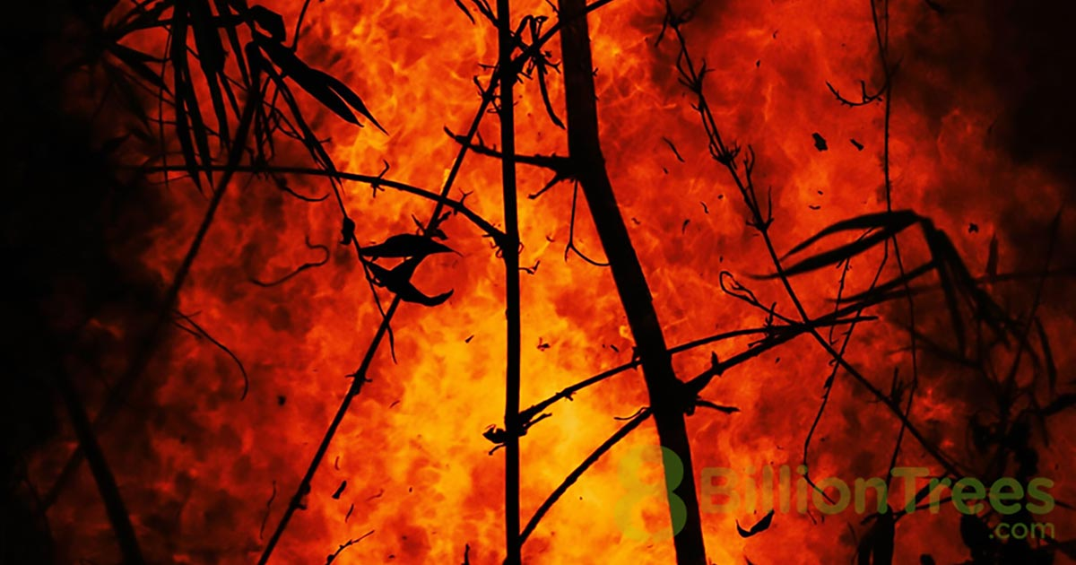 8 Billion Trees brand image of a wildfire raging in with a tree and its branches being burned down