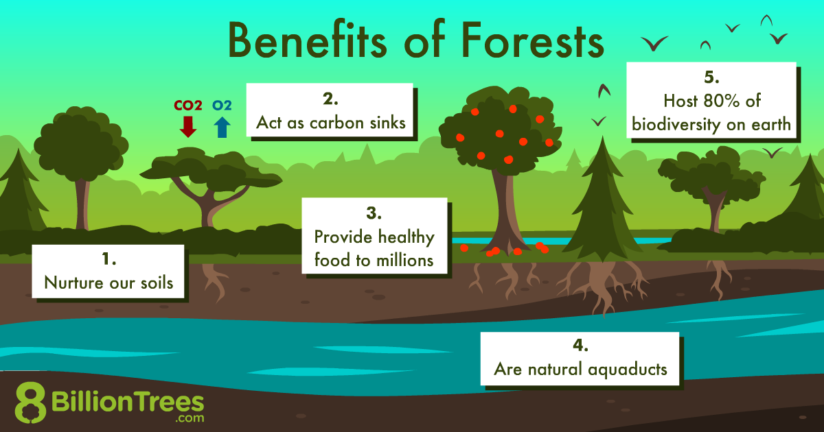 An 8 Billion Trees graphic showing the various benefits of forests for both human and environmental health.