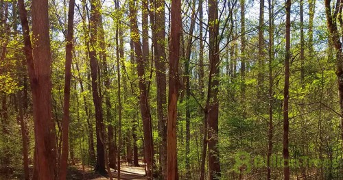 Great Smoky Mountains National Park forest trees in spring, dappled sunlight.