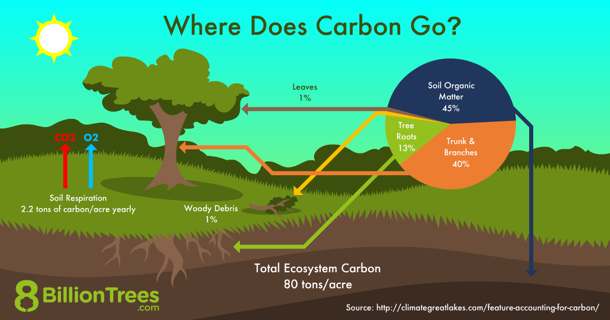 An 8 Billion trees graphic showing where carbon dioxide goes, with 45% of carbon going to soil organic matter, 40% to tree trunks and branches, 13% to tree roots, and 1% to wood debris.