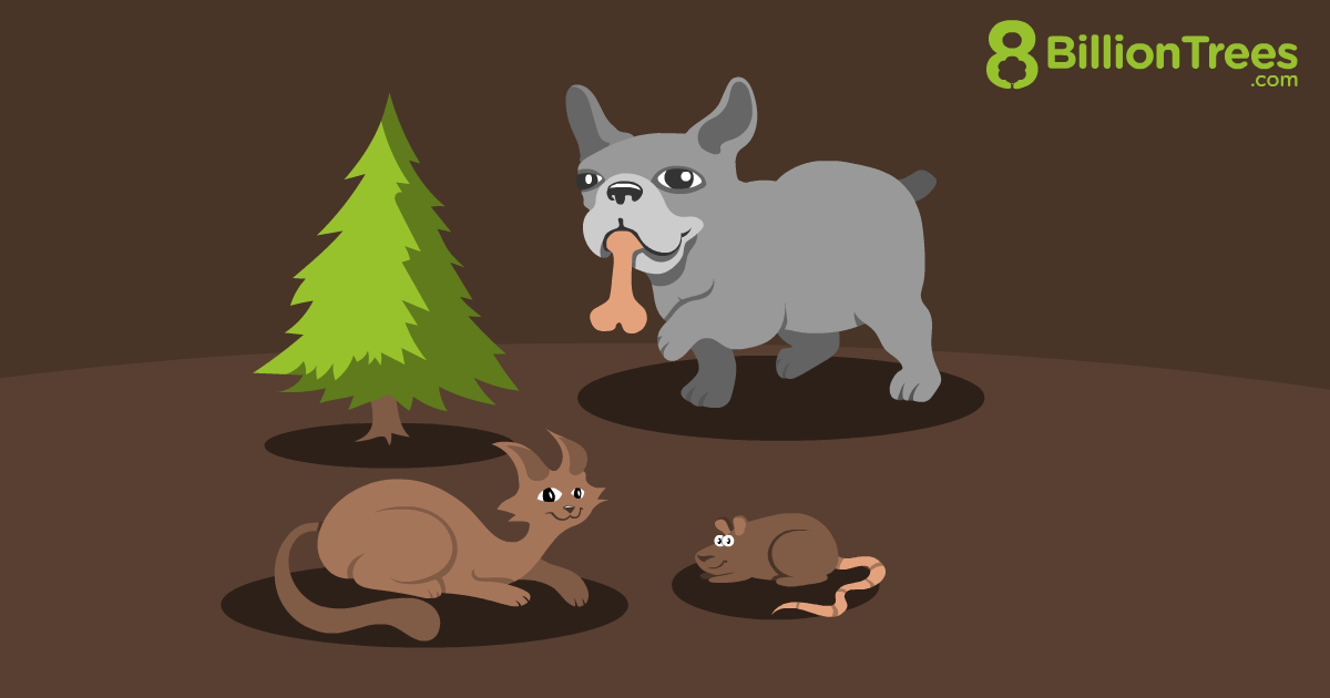 An 8 Billion Trees product image for the Pets Carbon Offset package.