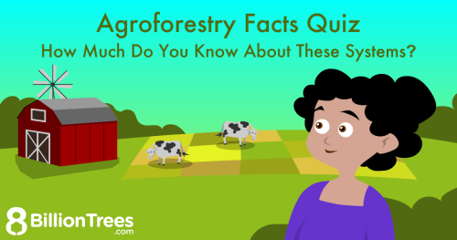 An 8 Billion Trees illustration of agroforestry facts, with a woman and a farm with cows.