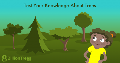 An 8 Billion Trees graphic of a kid with trees, testing their tree facts knowledge.