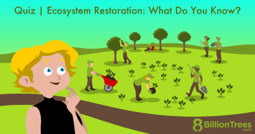 An 8 Billion Trees illustration of ecosystem restoration, with a woman and people planting trees.