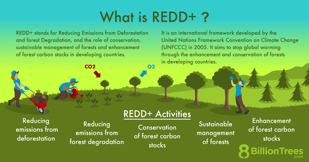 """An 8 Billion Trees graphic titled, """"What is REDD+"""" that explains how it stands for Reducing Emissions from Deforestation and forest Degradation, an international framework developed by the UN to fight global warming."""