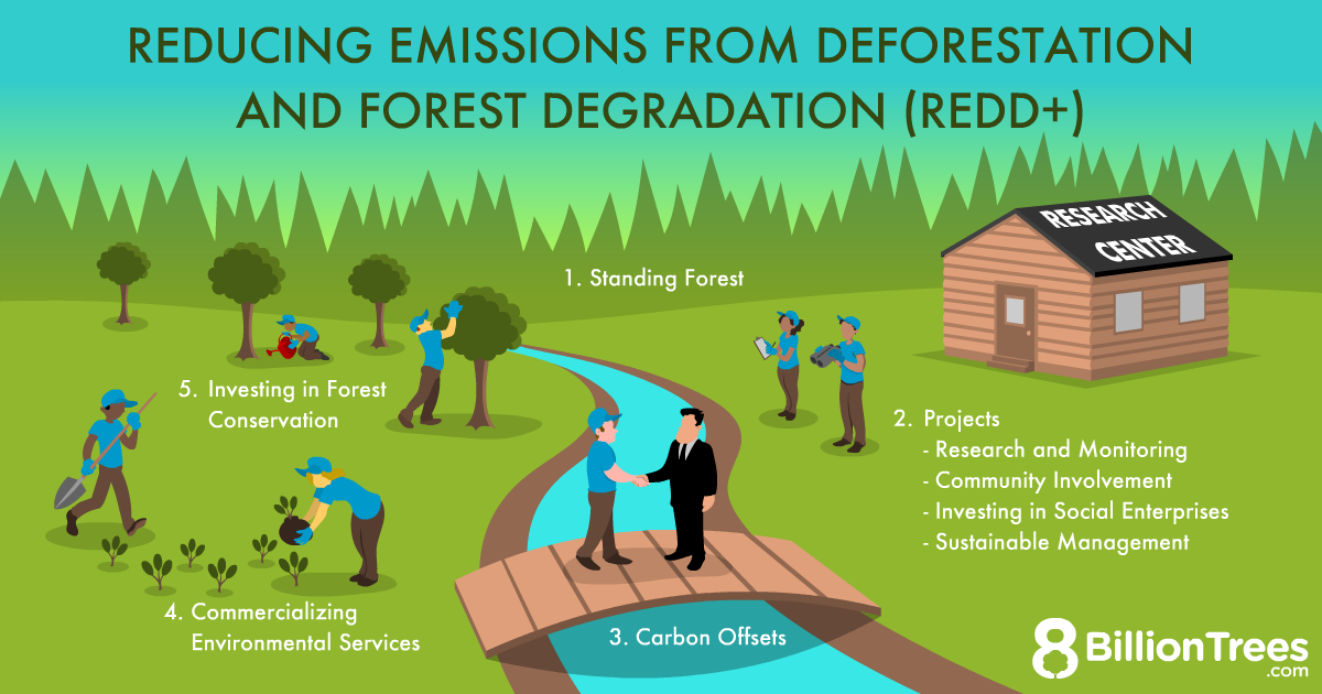 """An 8 Billion Trees graphic depicting """"Reducing Emissions from Deforestation and forest Degradation (REDD+), with illustrations of people performing research and environmental conservation."""